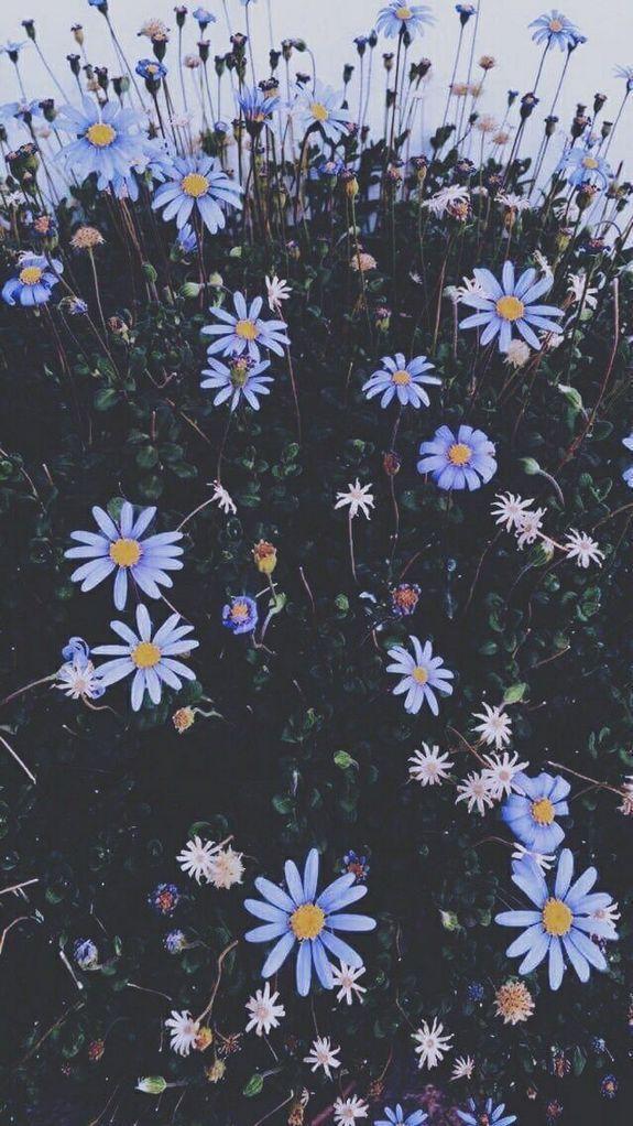 30 Marvelous Flower Wallpaper For Sytle Your New Iphone Xtra Inspira In 2020 Sunflower Wallpaper Flower Aesthetic Flower Wallpaper