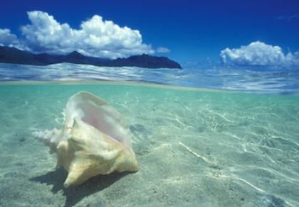 Best Beaches In Oahu To Find Shells