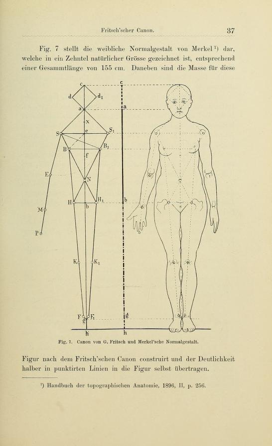 Gemütlich Weibliche Anatomie Referenz Für Künstler Bilder - Anatomie ...