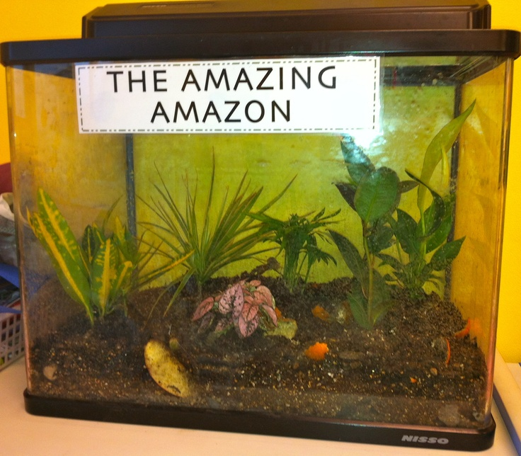 Elementary Science Rainforest Terrarium Made With