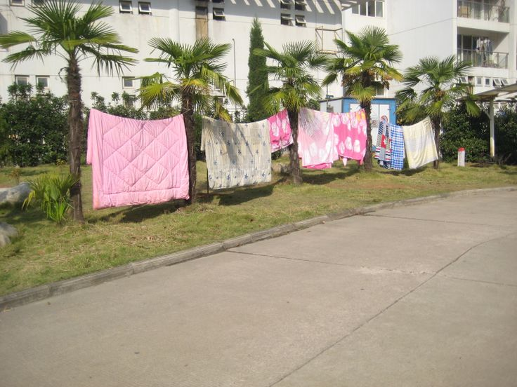 Something quirky about quilts on a line held up by palm trees <3