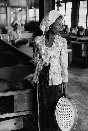 Indonesia. Tea worker, 1957 //Marc Riboud