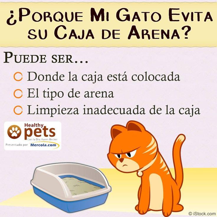 3 razones por las que los gatos orinan fuera de su caja de arena