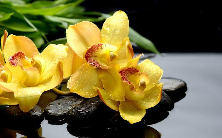 Скачать обои макро, отражение, черные, orchids, желтые, орхидеи, камни, капли, раздел цветы в разрешении 1440x900