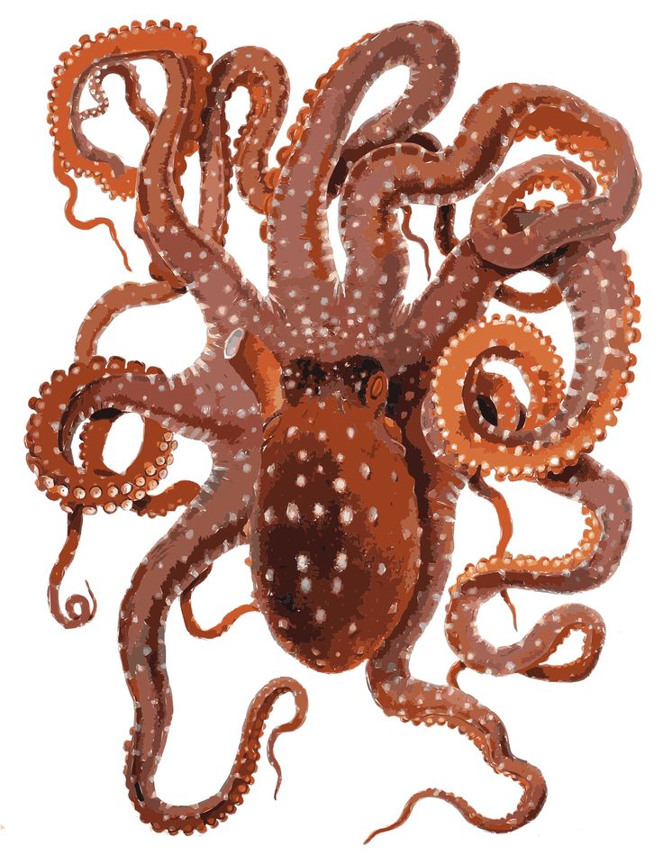 Request Cute Octopus by @rejon, Need a cute octopus character to be used in a cool new project. Anyone game? Think Japanese or anime, but simple and can hang with Pokemon characters, people will want to wear on tshirts and hats, and be connected to the Internet. So many octopus are scary looking and way too detailed, so this is not really close, and none are in the current Openclipart. Anyone inspired to help? http://commons.wikimedia.org/wiki/File:Octopus_macropus_Merculiano.jpg , on…