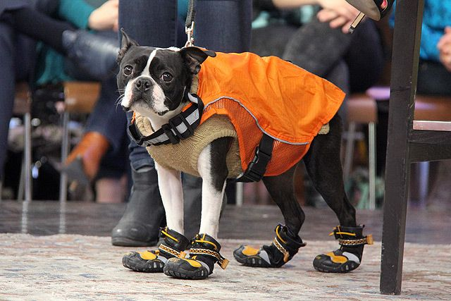 Keep your pooch dry and protected this spring