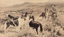 Scotch Collie History
