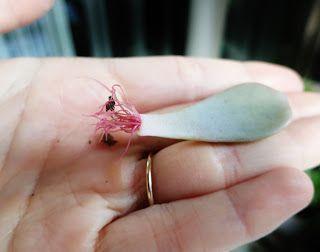DIY Propagating Succulents