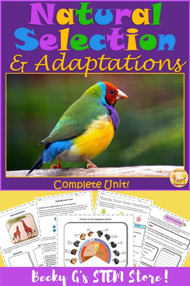 Natural Selection And Adaptation Complete Unit Reading Passages Language Arts Elementary Reading Comprehension Questions [ 1104 x 736 Pixel ]