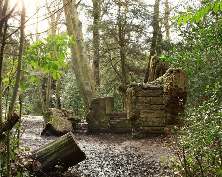 A Walk through Ancient Woodland