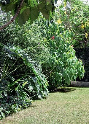 A reunião desordenada de plantas tropicais proporciona um aspecto de mata ao jardim. Entre elas, guaimbê, tumbérgia-azul-arbustiva, megakepasma (ou justícia-vermelha) e chuva-de-ouro