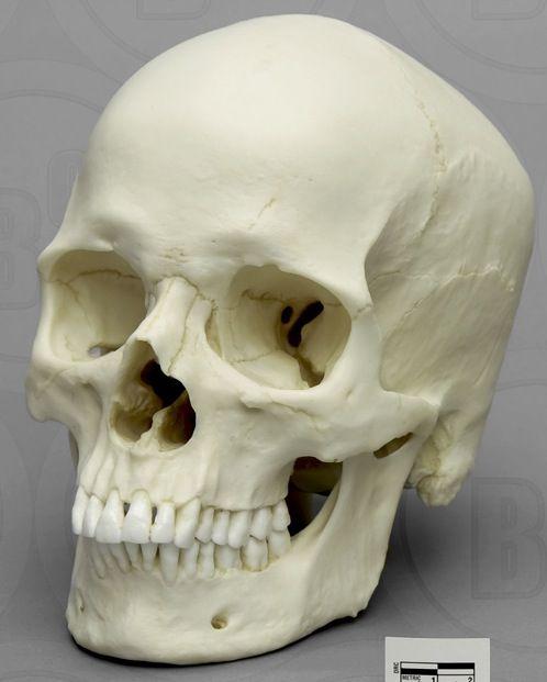 30 best human skeleton images on pinterest   human skeleton, Skeleton