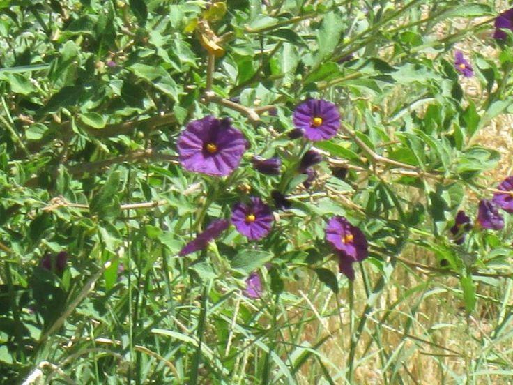 purple flowers by hayley jackson
