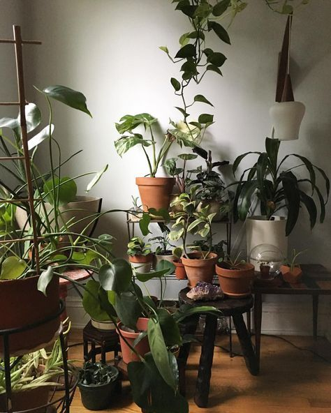 "131 Likes, 2 Comments - @mamakeavintage on Instagram: ""Saturday plant portrait  . . . . . . #jungalow #jungalowstyle #houseplantclub #houseplants…"""
