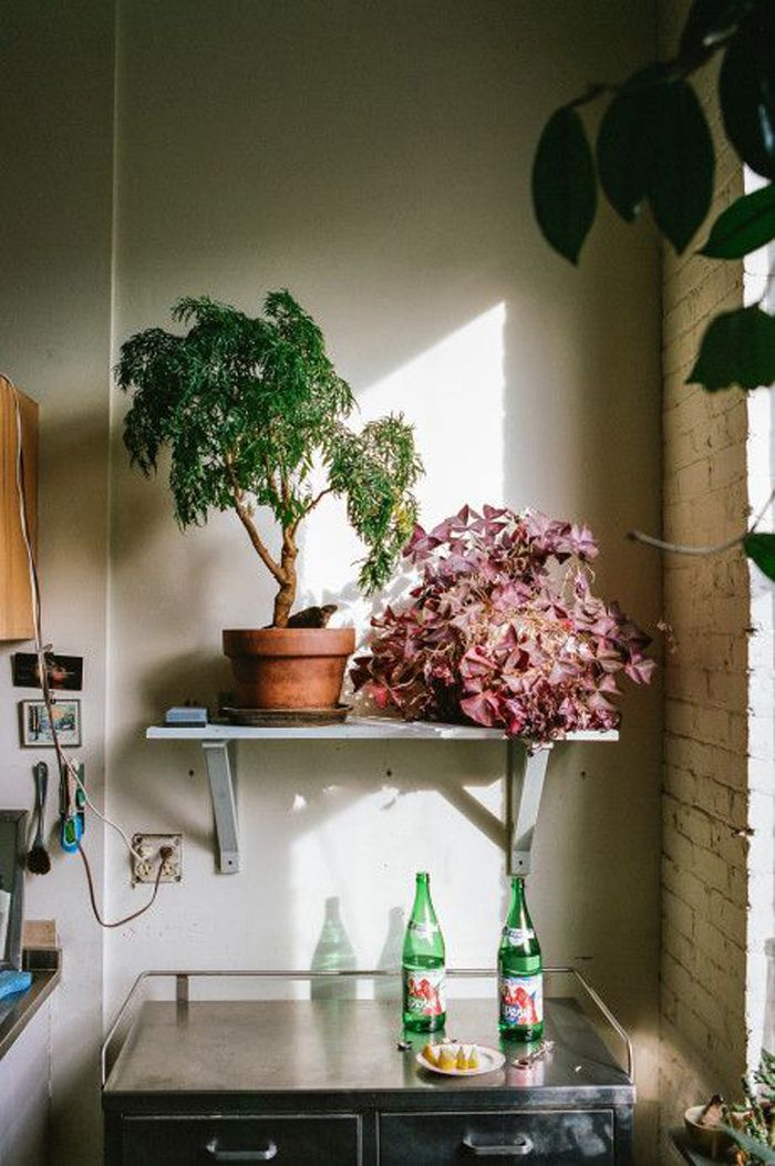Plants For Kitchen To Decorate It: Images On Pinterest
