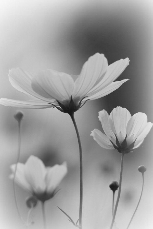 Best Flores En Blanco Y Negro Tumblr Image Collection