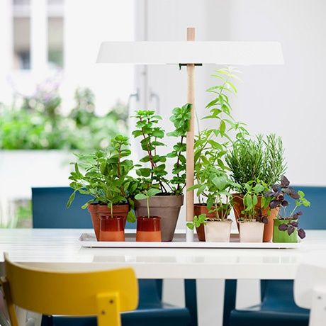Grow Light by Kekkilä | MONOQI #bestofdesign