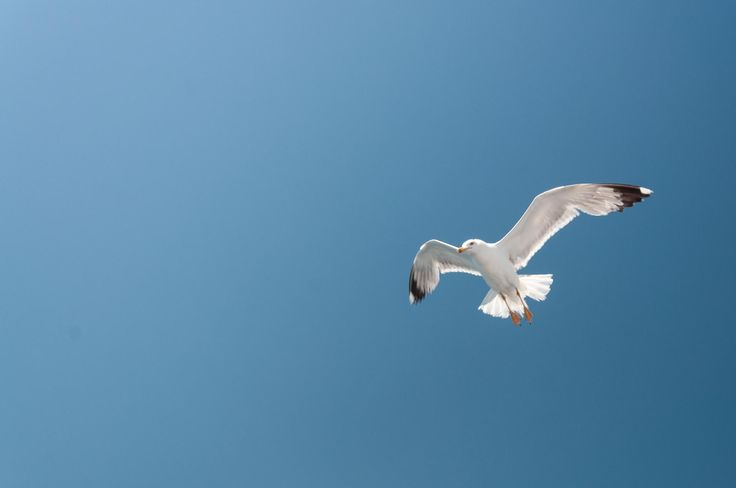 Clear blue sky by Fabi Nuka on 500px
