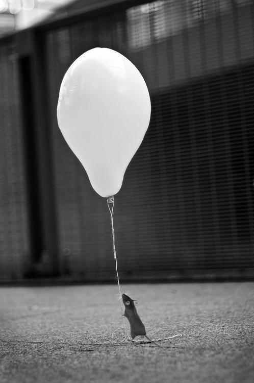 a mouse w/ a balloon.