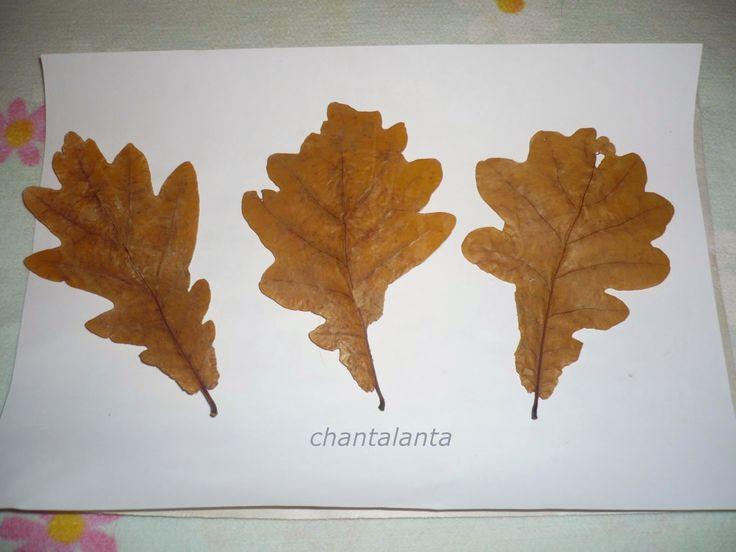 http://chantalanta.blogspot.com/2014/09/blog-post_8.html