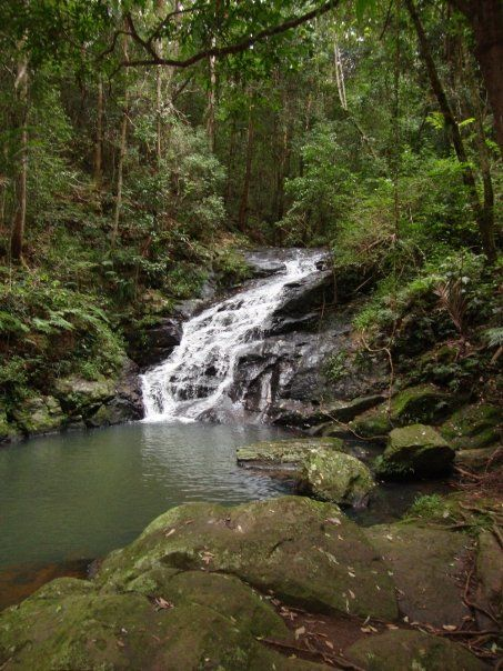 Kondalilla Falls Reviews - Maleny, Sunshine Coast Attractions - TripAdvisor