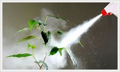 CONTROLE DE PRAGAS NO SEU JARDIM - RECEITAS NATURAIS: Lesmas Ponha pequenas armadilhas, taças com cerveja ou pedaços de pão embebido em leite, perto das plantas que quer proteger. As lesmas são atr...