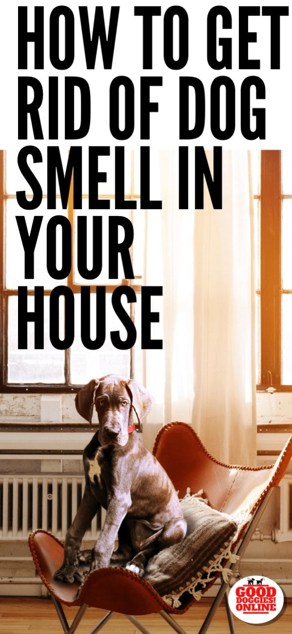 How to get rid of dog smell in the house #dogs #dogcare