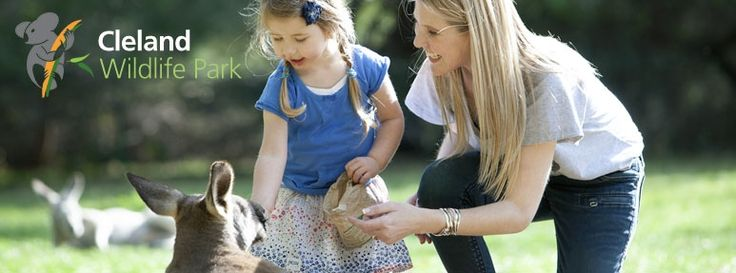 Cleland Wildlife Park near Adelaide - feed kangaroos and hold koalas!