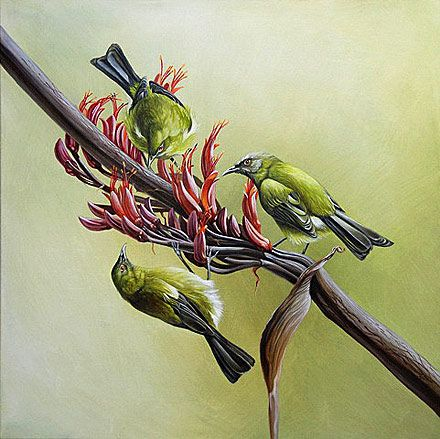 craig platt nz native bird artwork- Bell birds on Flax