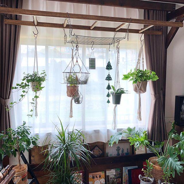 天井 植物 吊るす 鎖 の画像検索結果 植物 天井 鎖
