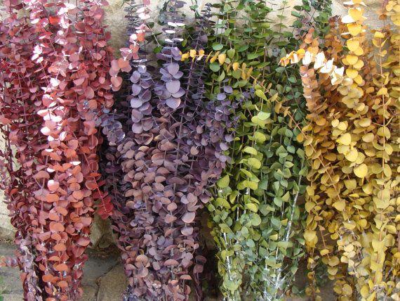 1/2 lb. Preserved Eucalyptus- Rustic Wedding- Dried Floral Arrangement- Primitive Wedding Wreath- Fall Decor- Fall Arrangement- Wall Decor