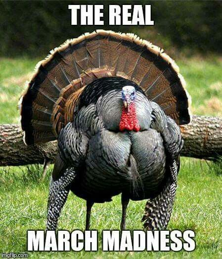 Call it what you will: Turkey Fever, Bird Flu, Gobbleritis...it's real!
