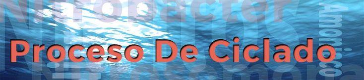 El Proceso Del Ciclado - El ciclado comienza cuando pones en marcha tu acuario, y termina cuando tienes niveles cero de amoniaco y nitritos.  Veamos la función de las bacterias nitrificantes de tu acuario Ahora que ya hemos visto por encima el ciclo del nitrógeno, vamos a ver como realizar el ciclado del acuario correcto y efectivo, además de lo más rápido posible.