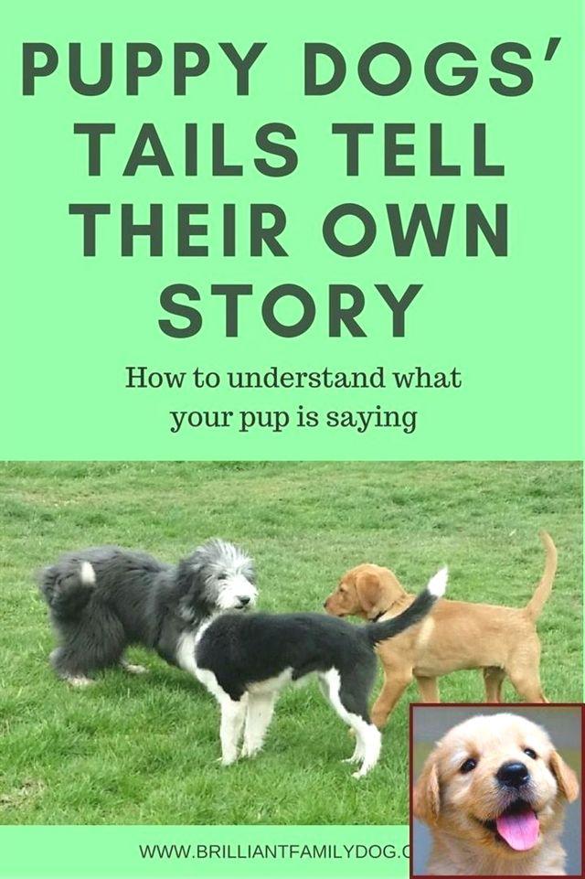Dog Training Documentary Dog Training Vest For Trainer Dog
