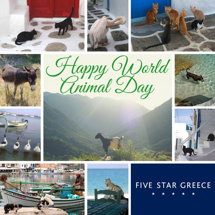 Happy World Animal Day! Make sure you give them an extra cuddle and treat today.  If you wish to donate to an animal sanctuary, we suggest Corfu Animal Rescue Establishment - CARE (www.carecorfu.com) who have been taking loving care of Corfu's strays for over a decade.