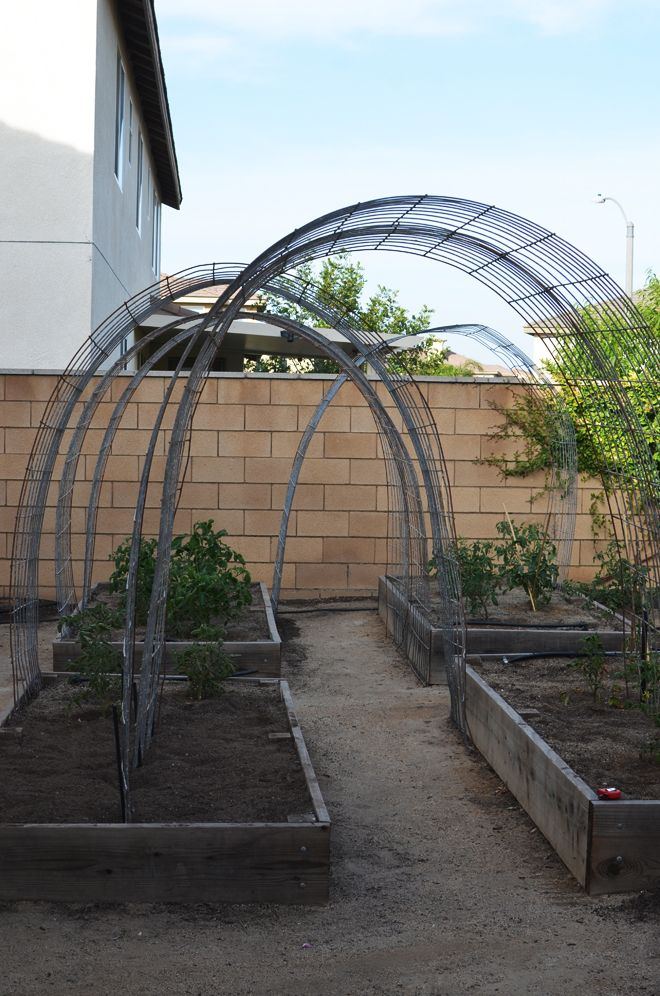 Tomato arbor - the plants grow up the arches. Would also be great for passionfruit!
