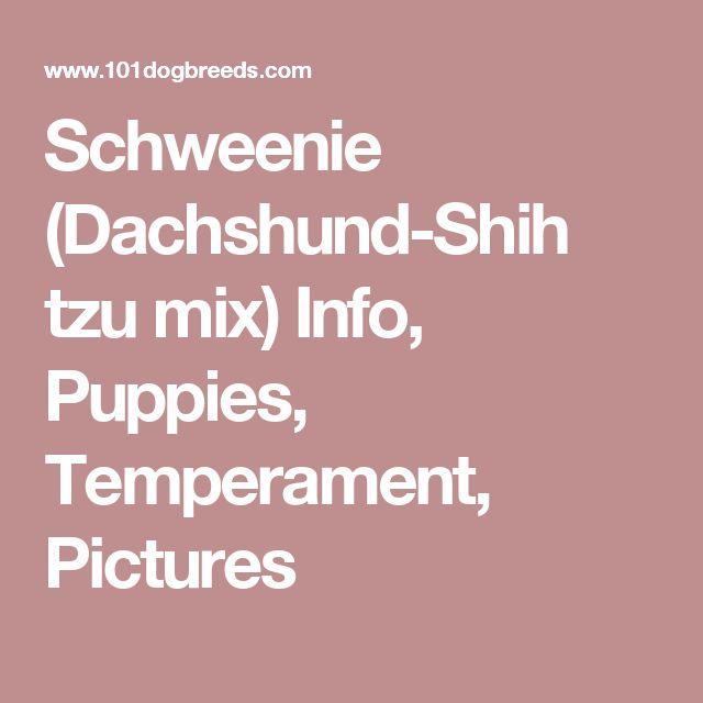 Schweenie (Dachshund-Shih tzu mix) Info, Puppies, Temperament, Pictures