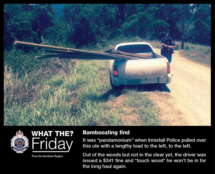 What the? Friday! Highlighting the bizarre things our officers see like... A bamboozling find  #WTFriday