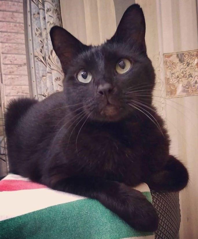 135 Black Boy Cat Names | Cats | Boy cat names, Cats, Cat names