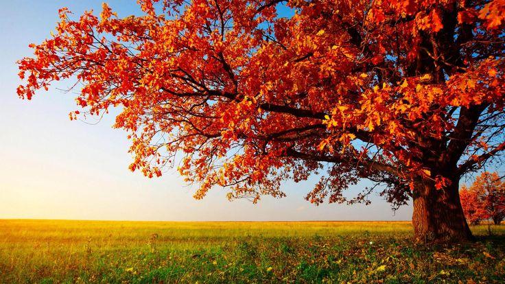 High Resolution Nature Desktop HD Wallpaper Widescreen Free