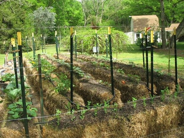 HayBale Gardening is simply a different type of container gardening. The main difference is that the container is the hay bale itself and is held together with some type of…