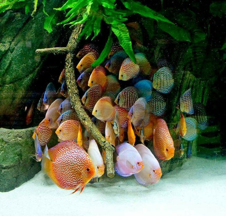 Beautiful fish but they look terrified