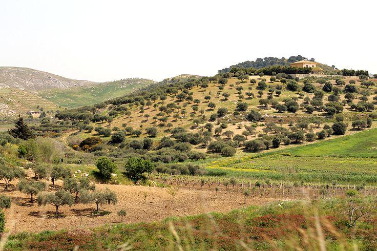 http://dania-kontra-ania.blogspot.com/2015/05/sycylia-erice-sciacca-licata-mazara-del-vallo-trapani.html
