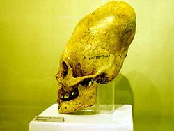 Crânedéformé - Ancient astronaut hypothesis - Wikipedia, the free encyclopedia
