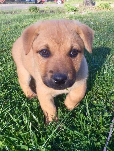 Adopt Elise on | dog | Paws rescue, Dogs, Labrador retriever mix