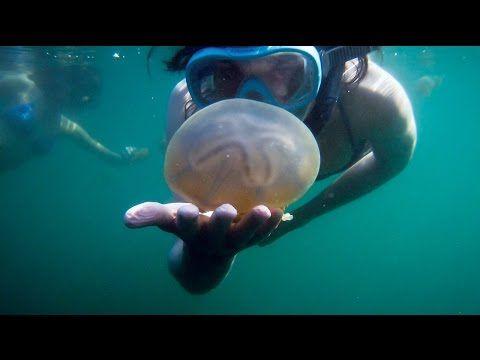 Danau Mariona Menyelam Bersama Ubu-Ubur di Togean Sulawesi Tengah - Sulawesi Tengah