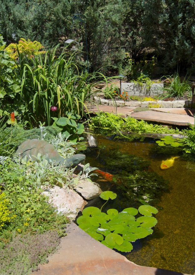 Beautiful koi and water plants in a lovely pond just for Koi pond plants