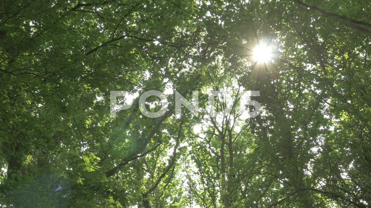 4k Sunlight Through Forest Trees Leaves Low Angle Lens Flare - Stock Footage | by RyanJonesFilms