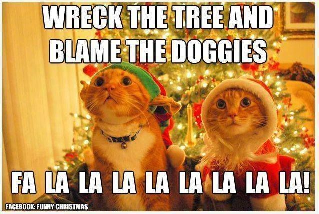 Does this look familiar in your household? #holidays #Christmas #pets
