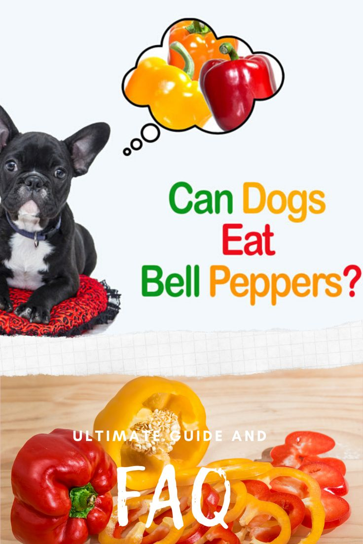 Is Black Pepper Bad For Dogs
